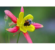bee on flower Photographic Print