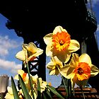 Daffodils under the bridge by Koon