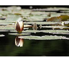 Unopened Water Lily Photographic Print