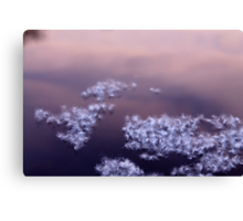 Floating On The Surface Canvas Print