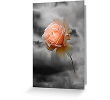 Rose Free Greeting Card