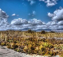 Path in Spanish Marshland by indiemod