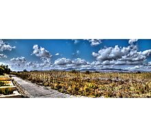Path in Spanish Marshland Photographic Print