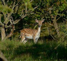 I am not Bambi !! by Peter Wiggerman
