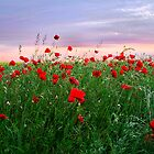 Sunrise Poppies by partridge