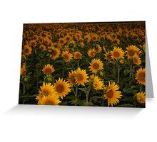 Sunny Sunflowers Greeting Card