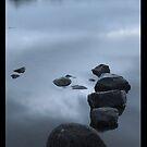 Loch Clunie by Sue Fallon Photography