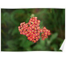 Petite Bouquet Poster