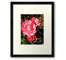 Governor General's Roses 9 Framed Print