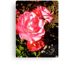Governor General's Roses 9 Canvas Print