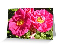 Governor General's Roses 10 Greeting Card