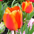 Two Red Tulips by WildestArt