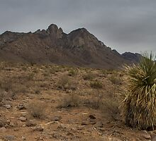 Organ Mountains - New Mexico by Richard Thelen