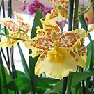 Yellow Brown Orchids Floral art Prints Orchid Flowers by BasleeArtPrints