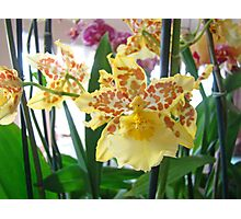 Yellow Brown Orchids Floral art Prints Orchid Flowers Photographic Print