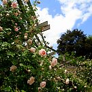 Rose Arbor by Brent McMurry