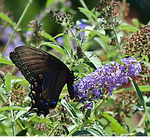 Butterfly on Bush Photographic Print