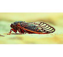 Cicada 11 Photographic Print