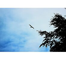 Bird in sky Photographic Print