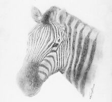 Zebra Portrait by Eric Fan