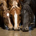Sweet Desert Water by Kent Keller