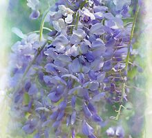 wonderful wisteria by Teresa Pople