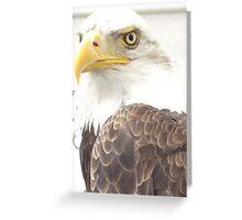 Dollar - The Bald Eagle Greeting Card