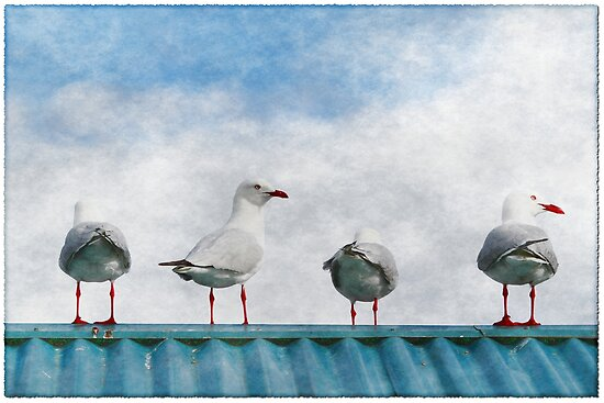 Four Seagulls on a Tin Roof by Stephen Mitchell