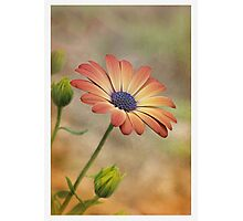 Peach Magic Photographic Print