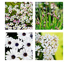 Summer flowers quad Photographic Print