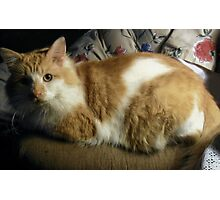 The Late Great Wampus Cat Photographic Print