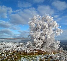 Frosted tree. by Neil MacNeill