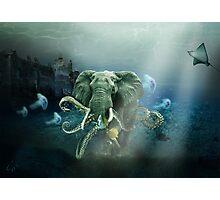 Marine elephant Photographic Print