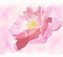 Rose - Pink Blush by MotherNature2