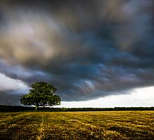 Lone Tree with Storm Clouds by Ian Hufton