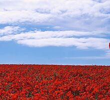 Poppy Field by fernblacker