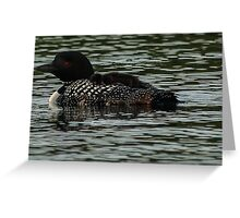 Mother loon and chick Greeting Card