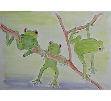 'FROGS' Photographic Print