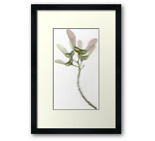 Helicopters (Winged Sycamore Seeds) Framed Print