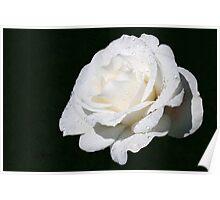 Wondrous White! Poster