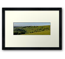 Following like Sheep Framed Print