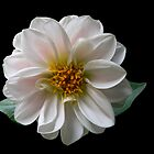 Whirling White! by Doug Norkum
