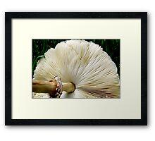 Under the Mushroom Framed Print