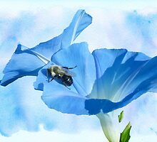 Bumblebee and Blue Morning Glory by MotherNature2