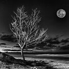 Silvery June Moon by Cheryl Styles