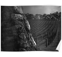 Scary Tree- Hills Vineyard Poster