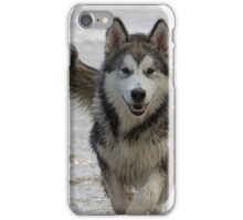 Teyah, Alaskan Malamute iPhone Case/Skin