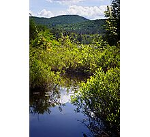 Knee Deep in a Bog Photographic Print