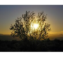 RIO VERDE NATIONAL FOREST ARIZONA JANUARY 2008 Photographic Print