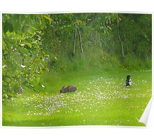 The Rabbit and the Magpie in a meadow Poster